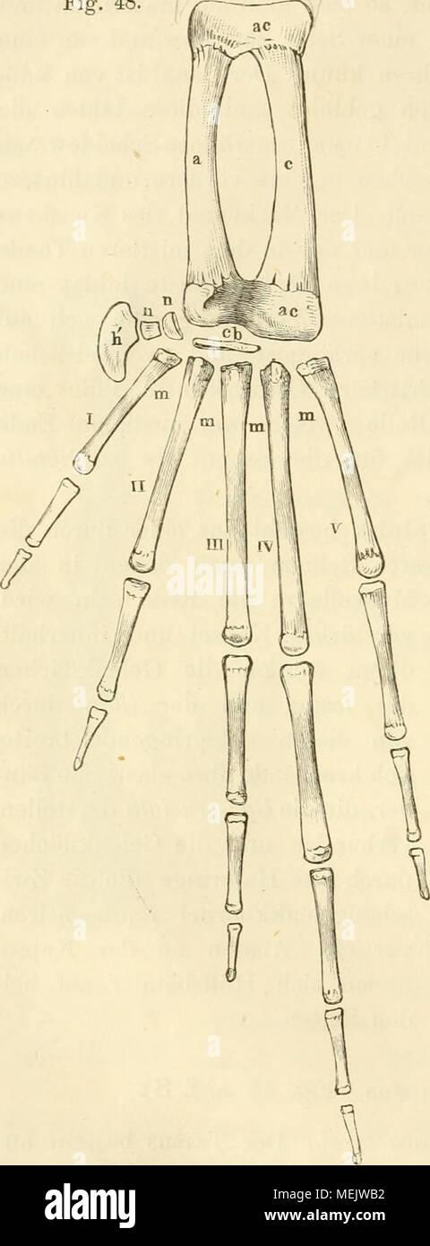 Großartig Mitte Rückenmuskulatur Anatomie Ideen - Anatomie Von ...