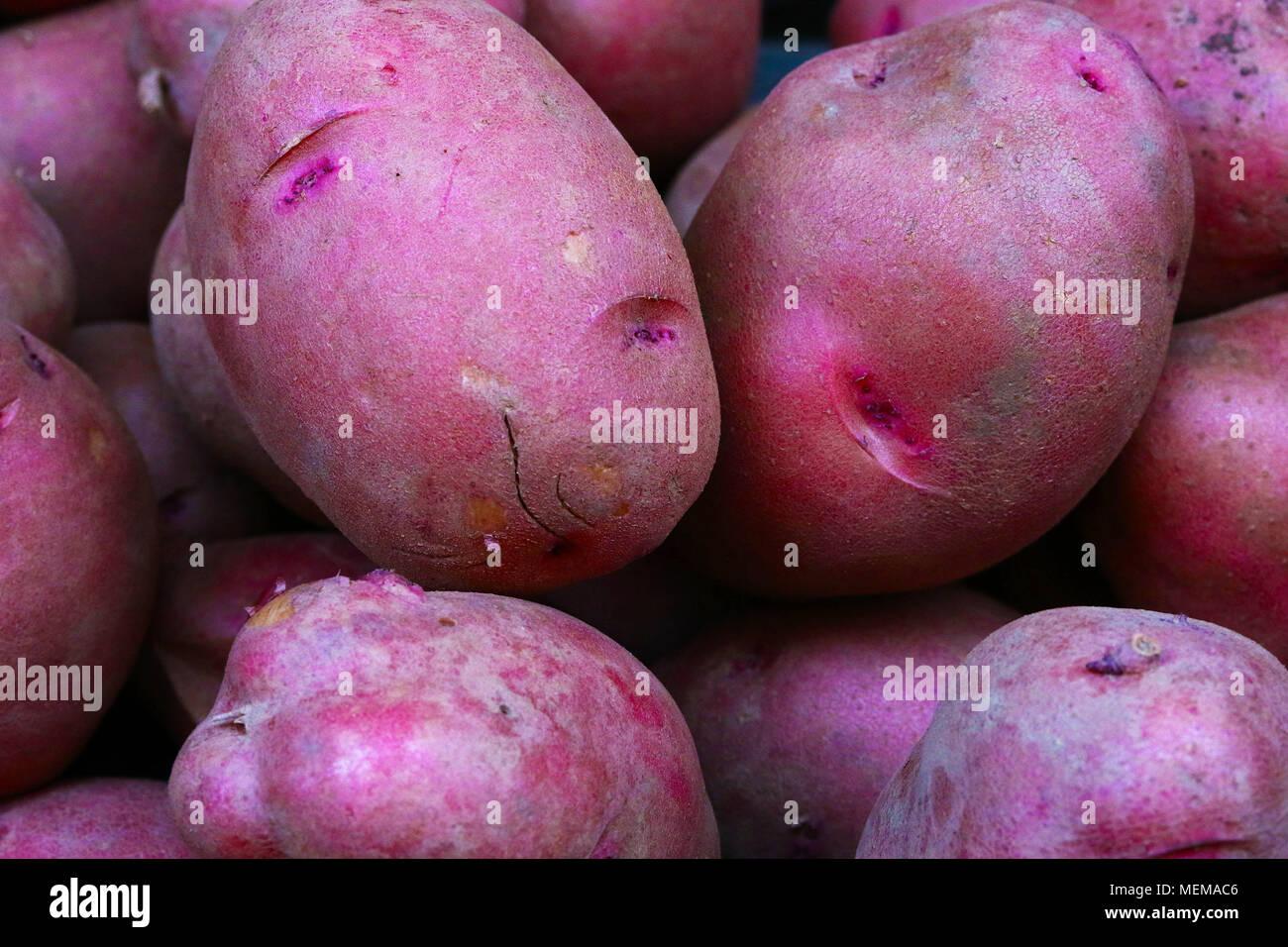NY 118 Kartoffeln bei Farmer's Market gesehen Stockbild