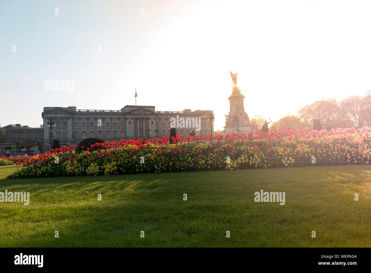 Buckingham Palace in der Abenddämmerung im Frühjahr mit leuchtend roten Blüten für die Commonwealth Tagung der Regierungschefs im April 2018 Stockbild