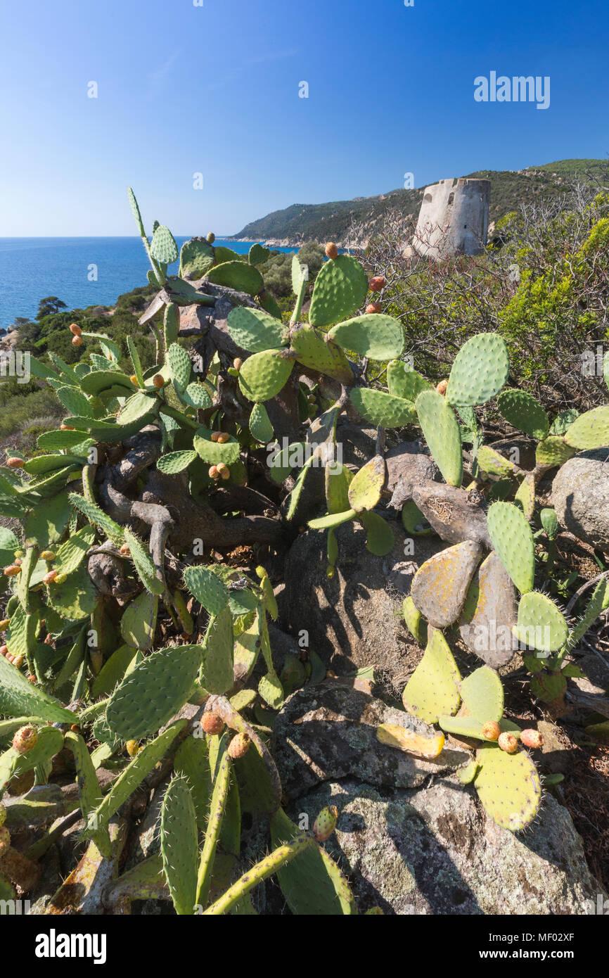 Kaktusfeigen des Landesinneren umrahmen den Turm mit Blick auf das türkisfarbene Meer Cala Pira Castiadas Cagliari Sardinien Italien Europa Stockfoto