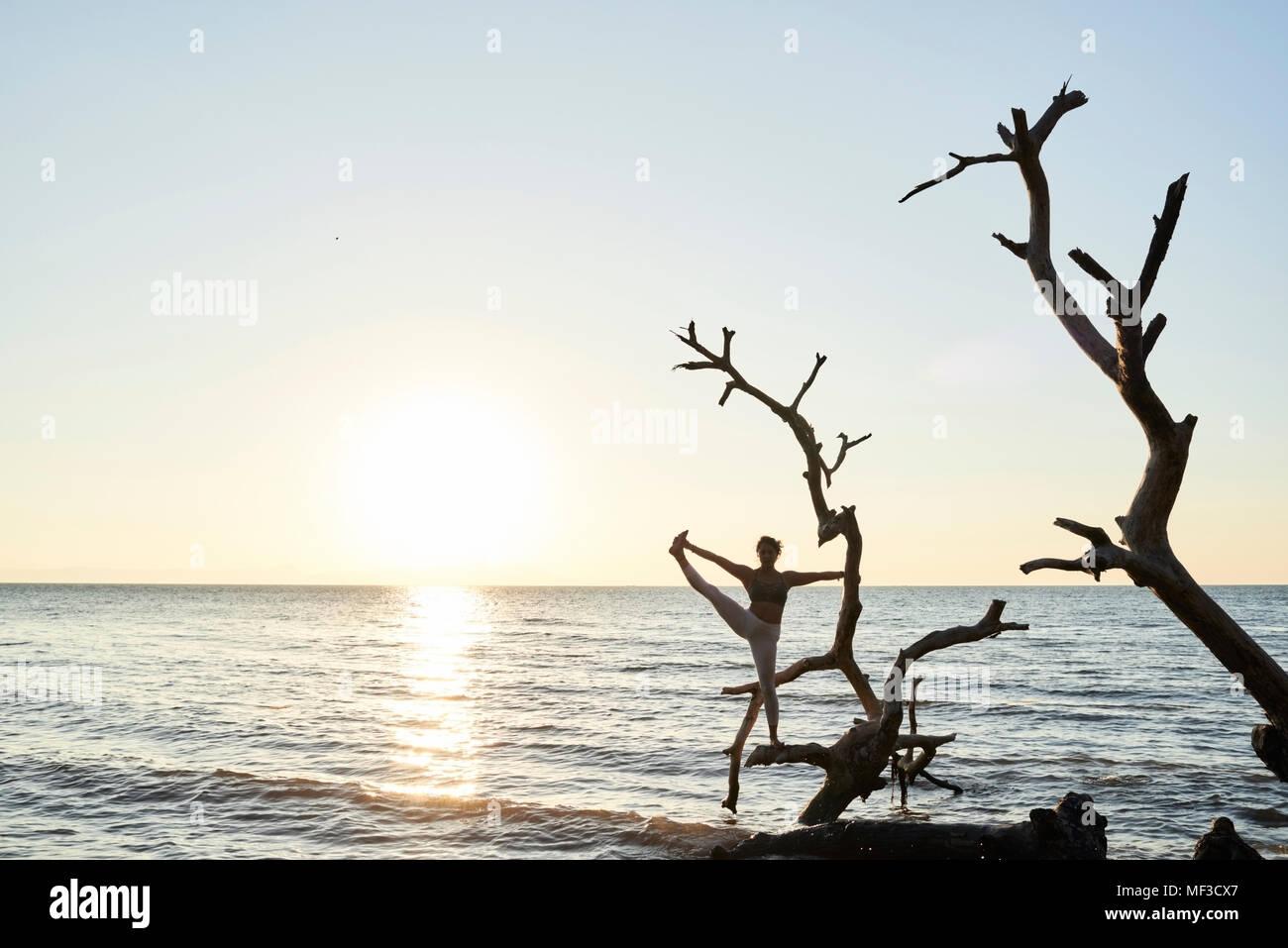 Junge Frau mit Yoga auf einen umgestürzten Baum im Meer bei Sonnenuntergang Stockbild