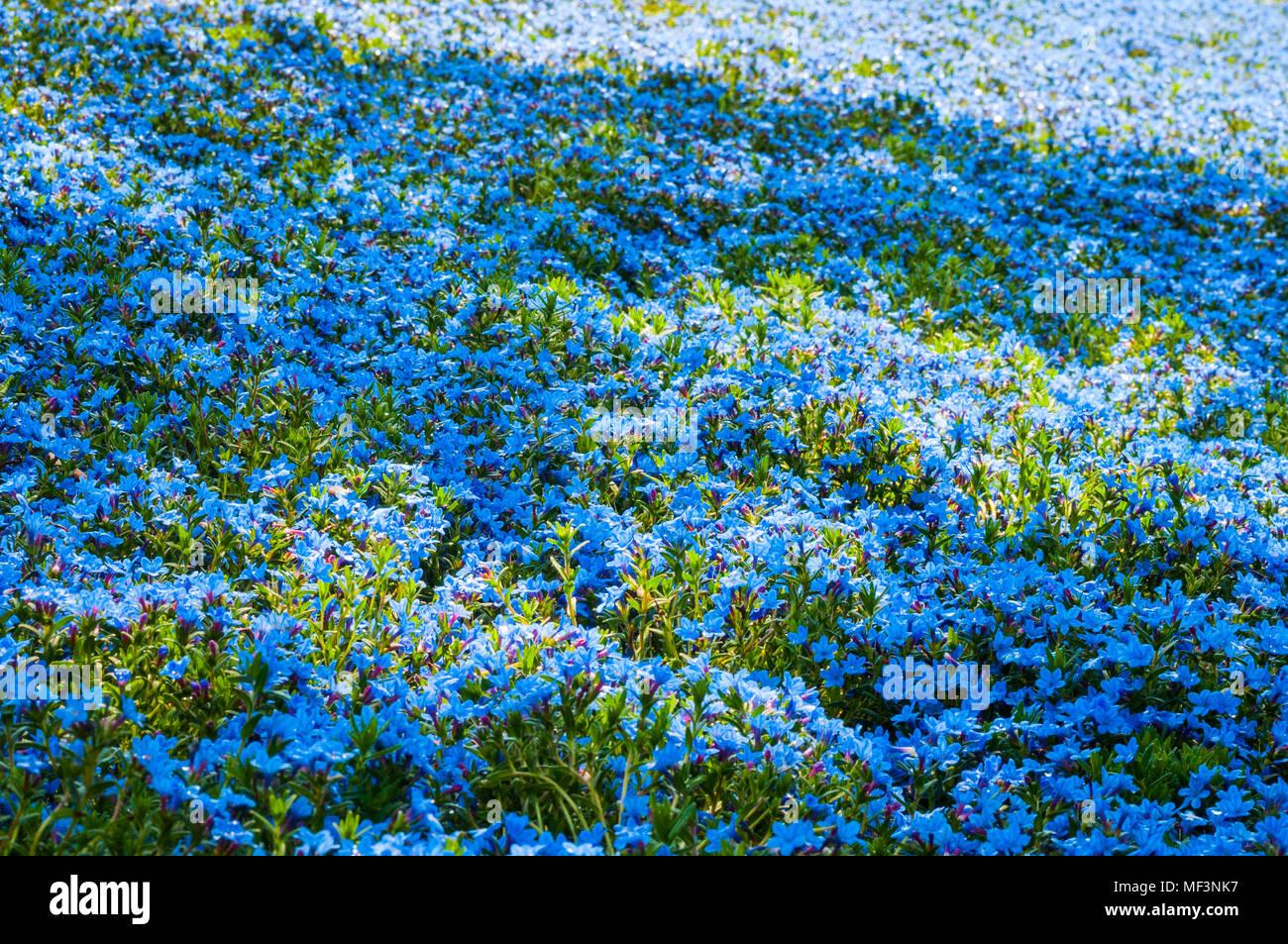 Blumenbeet Mit Verschiedenen Pflanzen Und Blumen Farben Blau