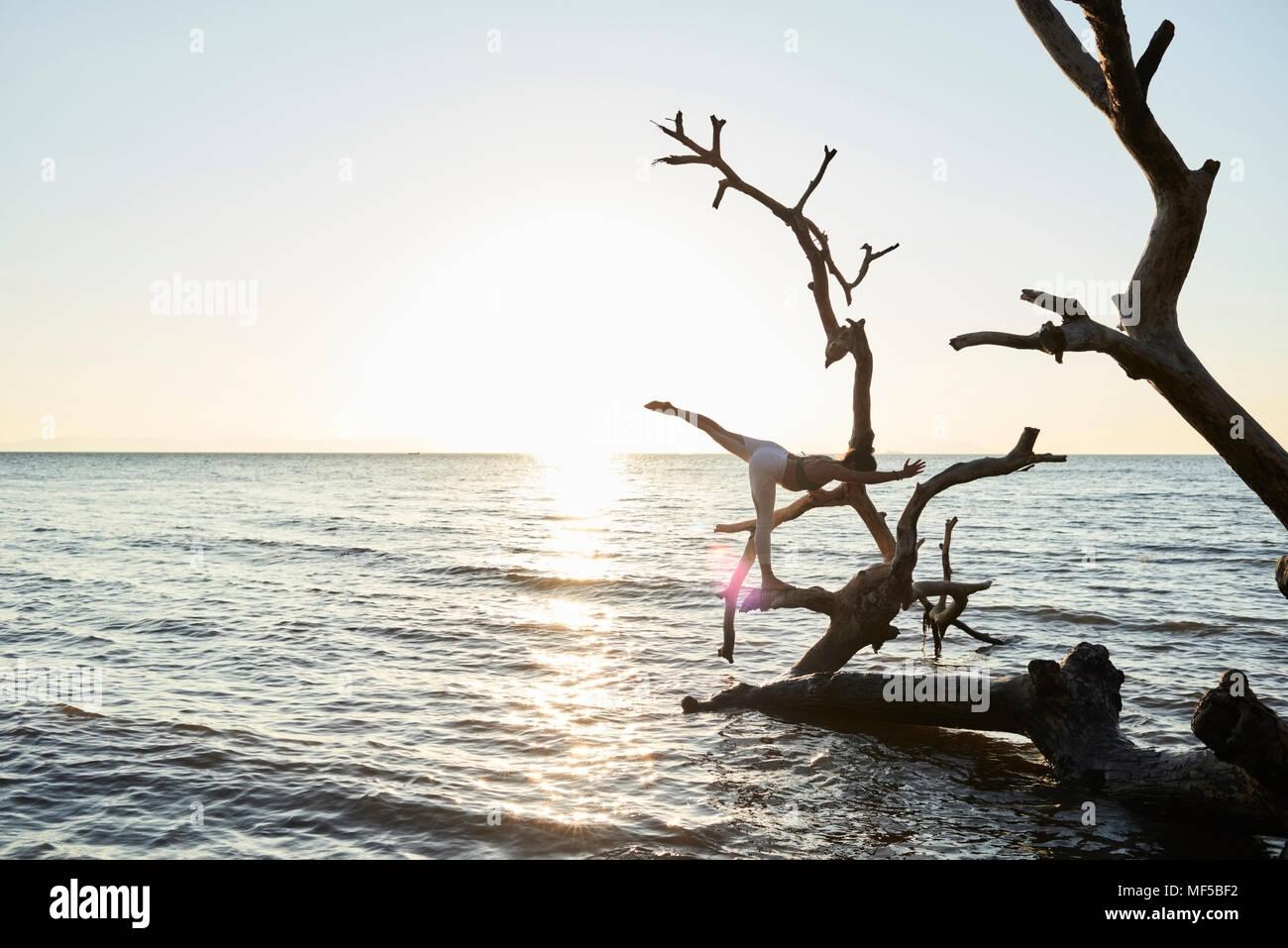 Junge Frau mit Yoga auf einen umgestürzten Baum im Meer bei Sonnenuntergang Stockfoto
