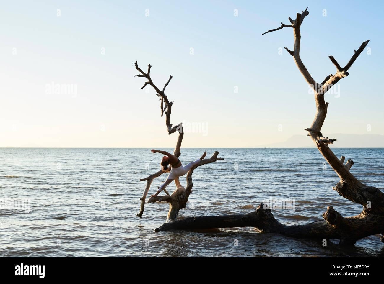 Junge Frau mit Yoga auf einen umgestürzten Baum im Meer Stockbild