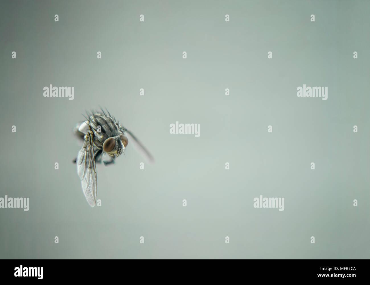 Schwarze fliegen der kleine wohnung winter in im Kleine Fliegen