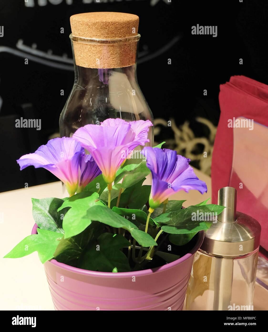 Lila Morning Glory Blumen Den Tisch Fur Haus Und Dekoration