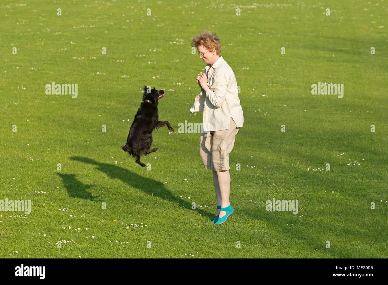 Frau, Hund springen Stockbild