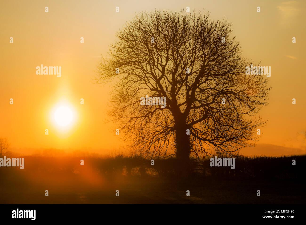 Sonnenaufgang über den Feldern Stockbild