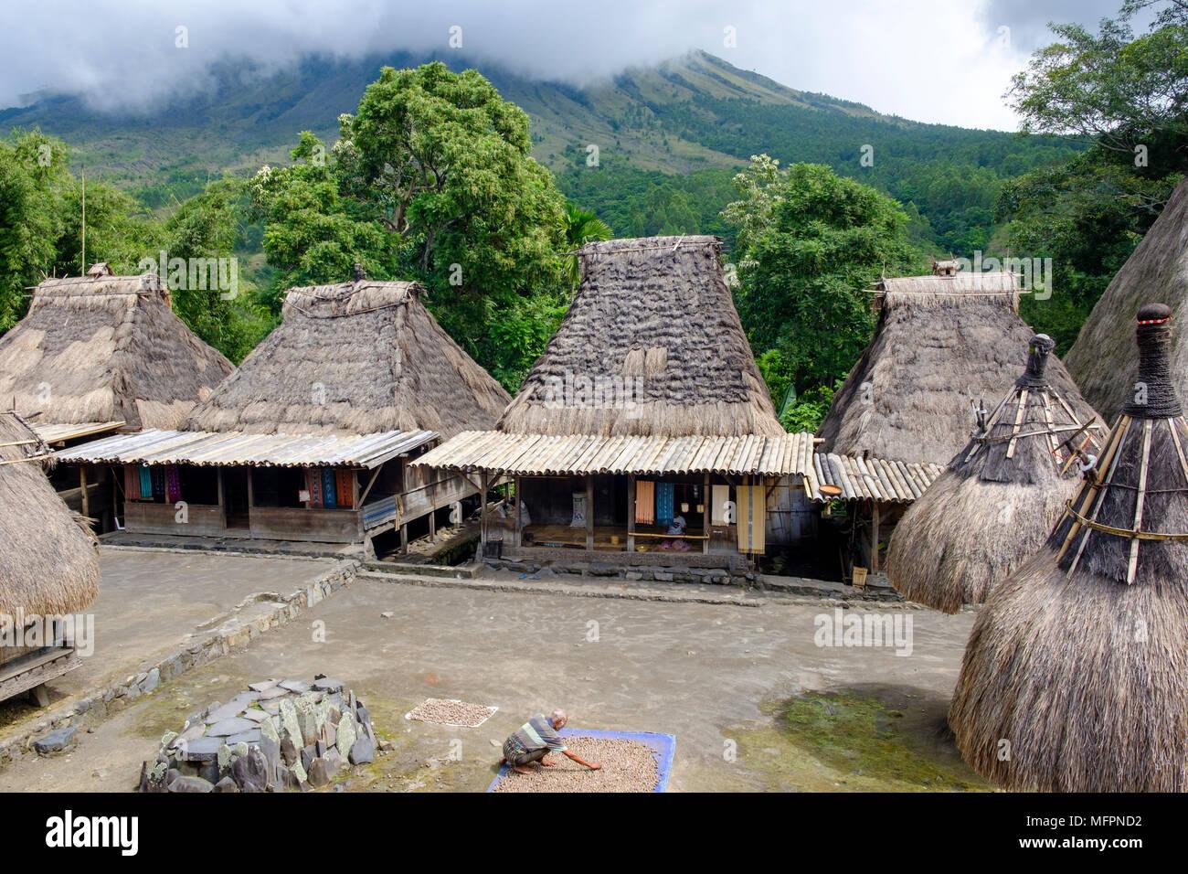 Ein Mann die Kontrolle der Muttern legte bei Bena, traditionelles Dorf, zu trocknen, ngada Bezirk, Insel Flores, Indonesien. Stockbild