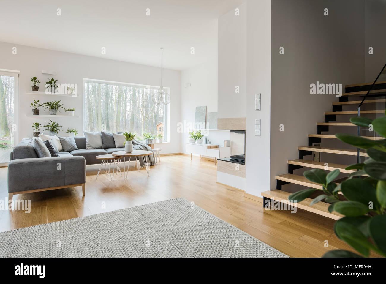 Weiss Wohnzimmer Interieur Mit Graue Eckcouch Frische Grune Pflanzen