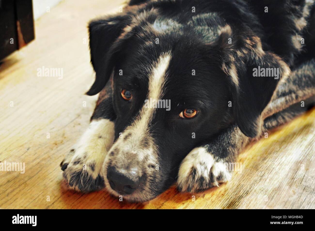 Ein Tag in einem Hunde leben Stockbild