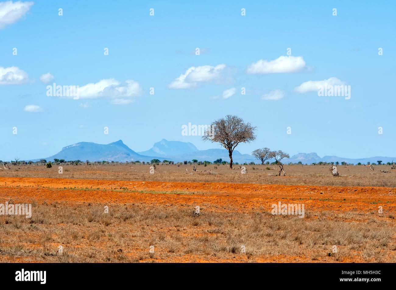 Wunderschöne Landschaft mit niemand Baum in Afrika Stockbild