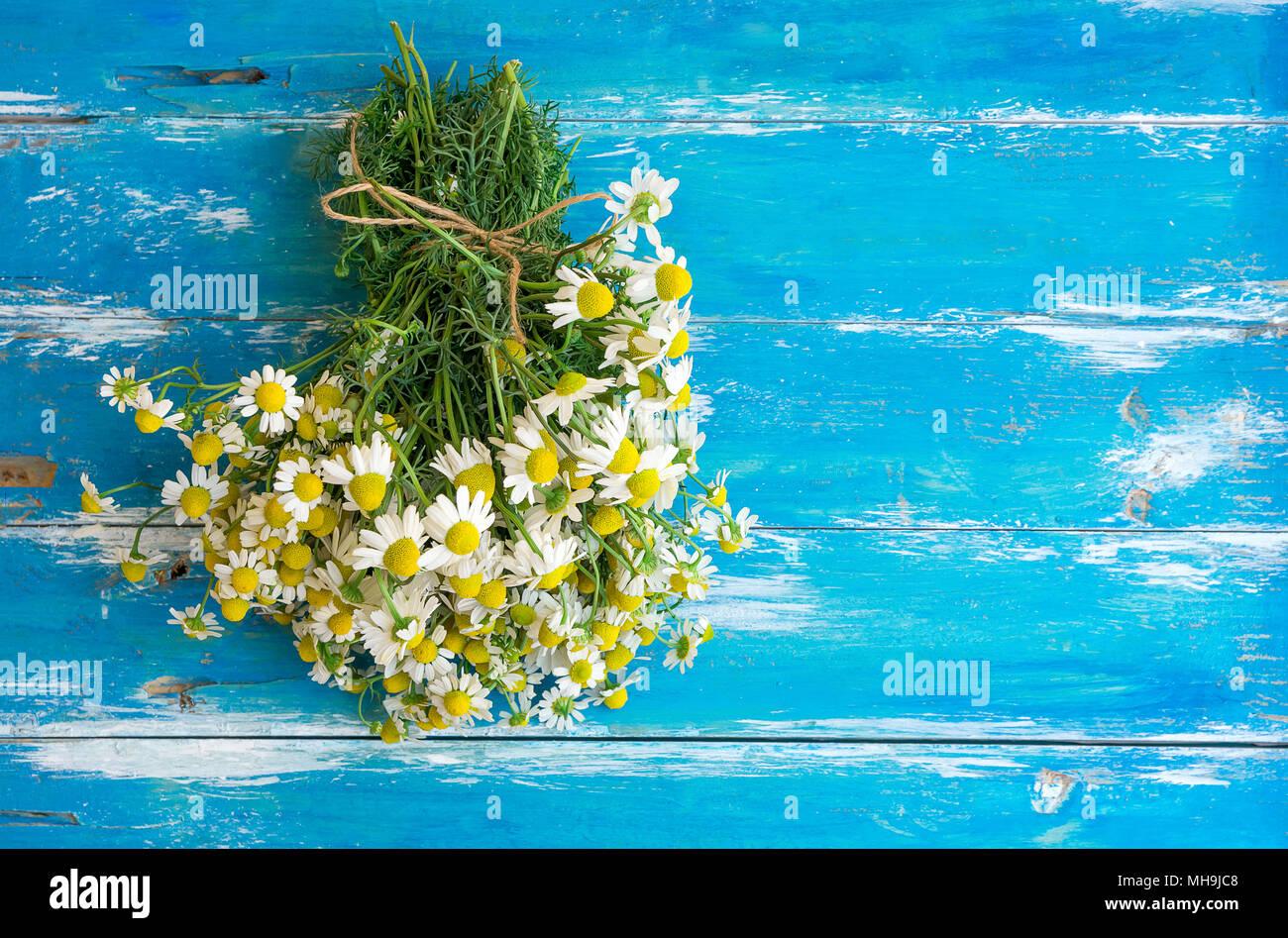 Blumenstrauss Aus Frisch Gepfluckte Kamille Blumen Gebunden Mit Garn