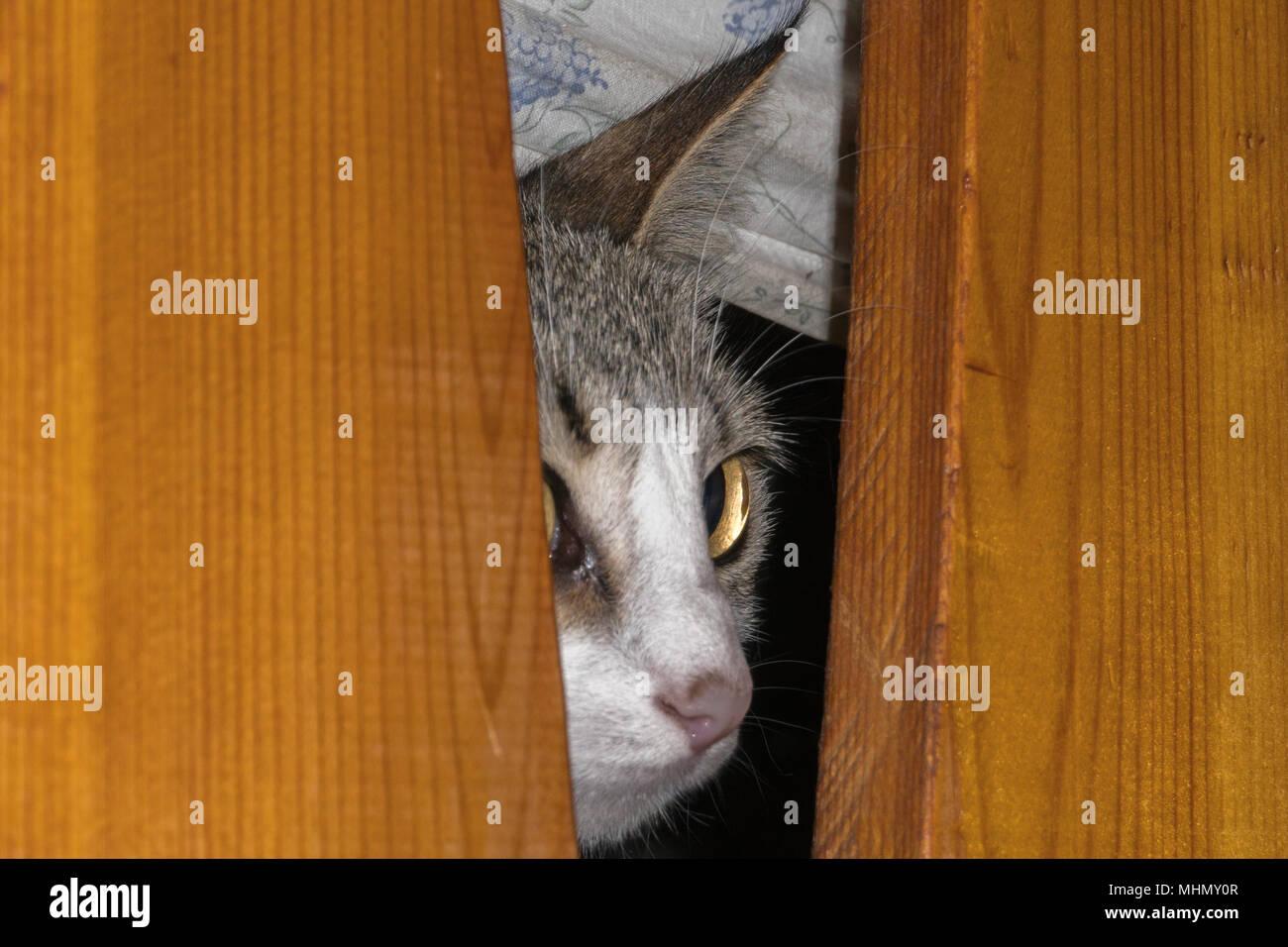 Neugierige Katze Unter Dem Bett Verstecken Und Suchen Sie Lustig
