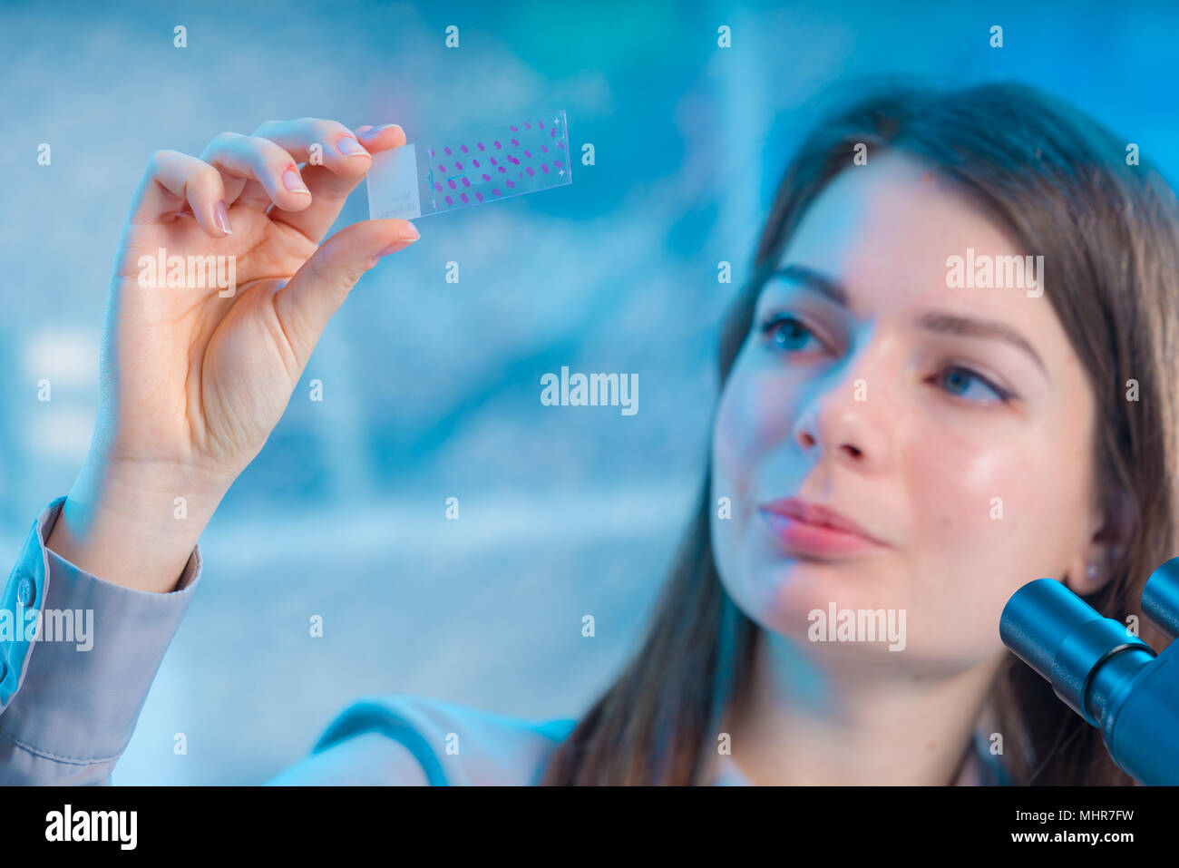 Blutprobe auf Objektträger. Forscher analysieren Objektträger Stockbild