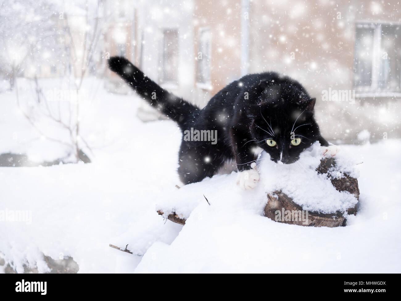 Schwarze und weiße Katze klettern auf Holz- stumpf im Schnee bei Schneefall. Stockbild