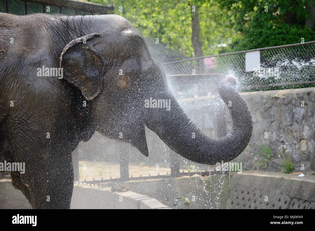 Elefanten im Zoo unter der Dusche Stockfoto, Bild: 183182981