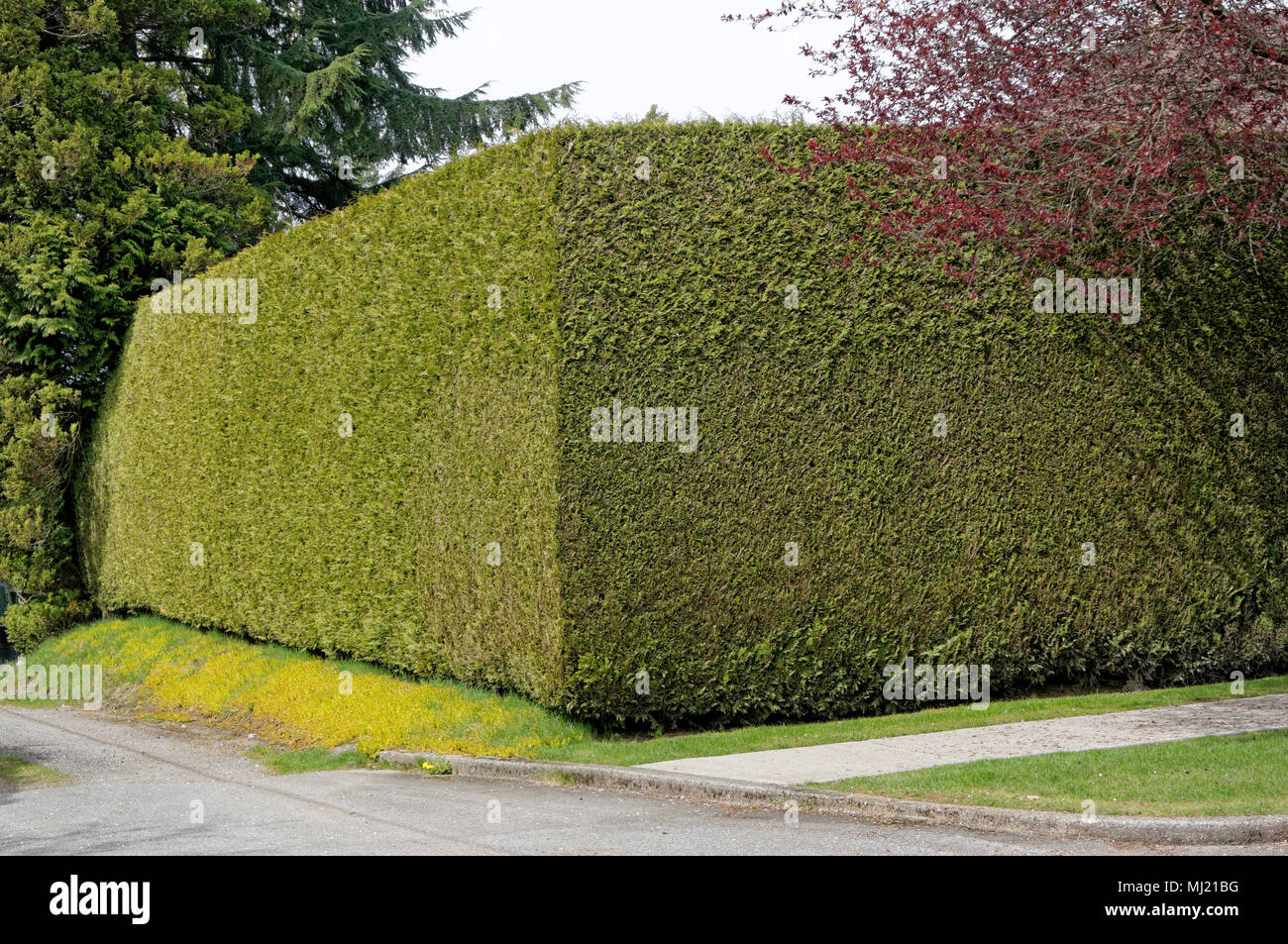 Sculpted Hedges Stockfotos und bilder Kaufen Alamy