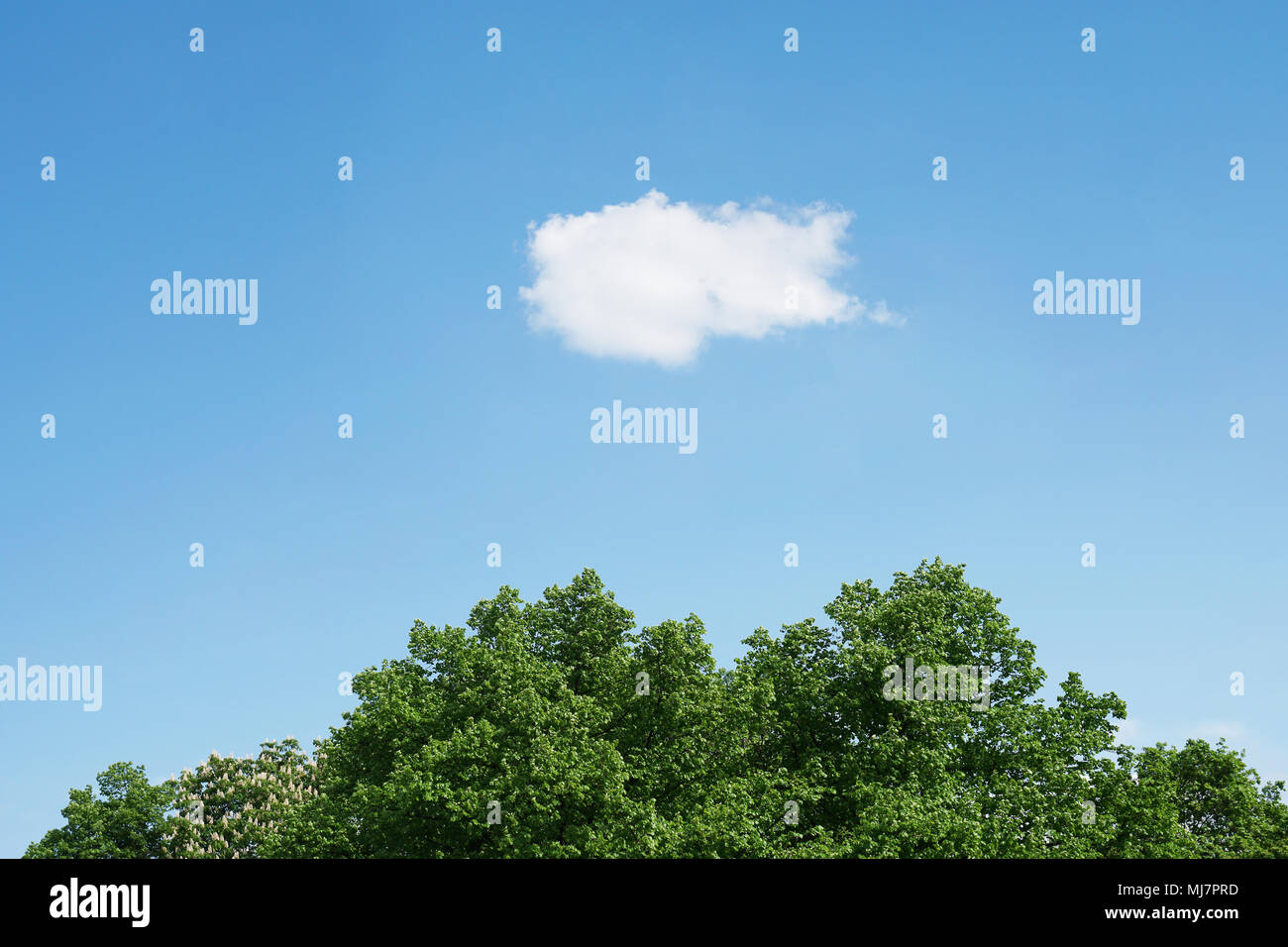 Blauer Himmel mit weißen Wolken über grünen Wipfel, horizontal Natur Hintergrund mit Kopie Raum Stockbild
