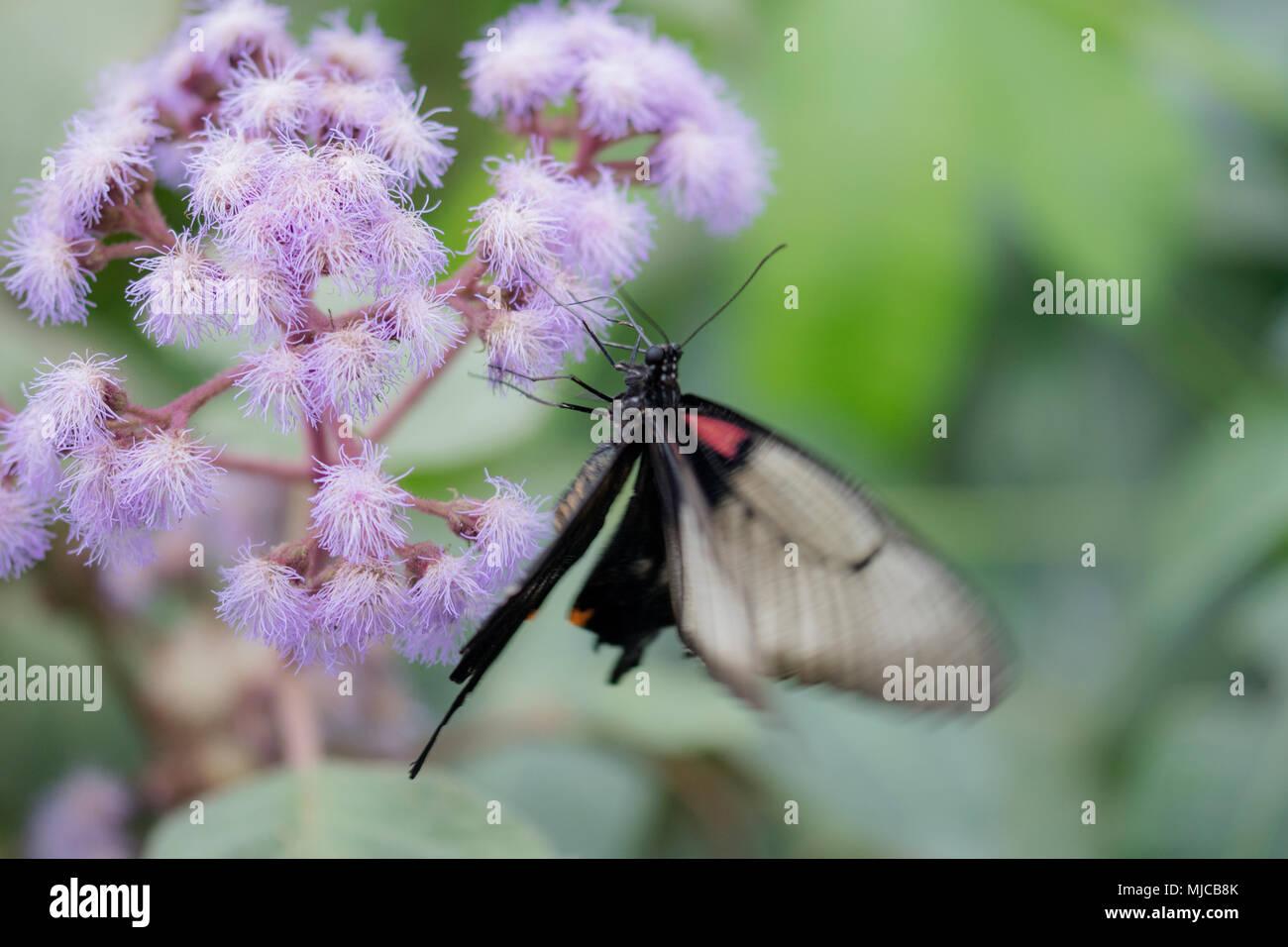 Weiche makro Schmetterling auf Blume Stockbild