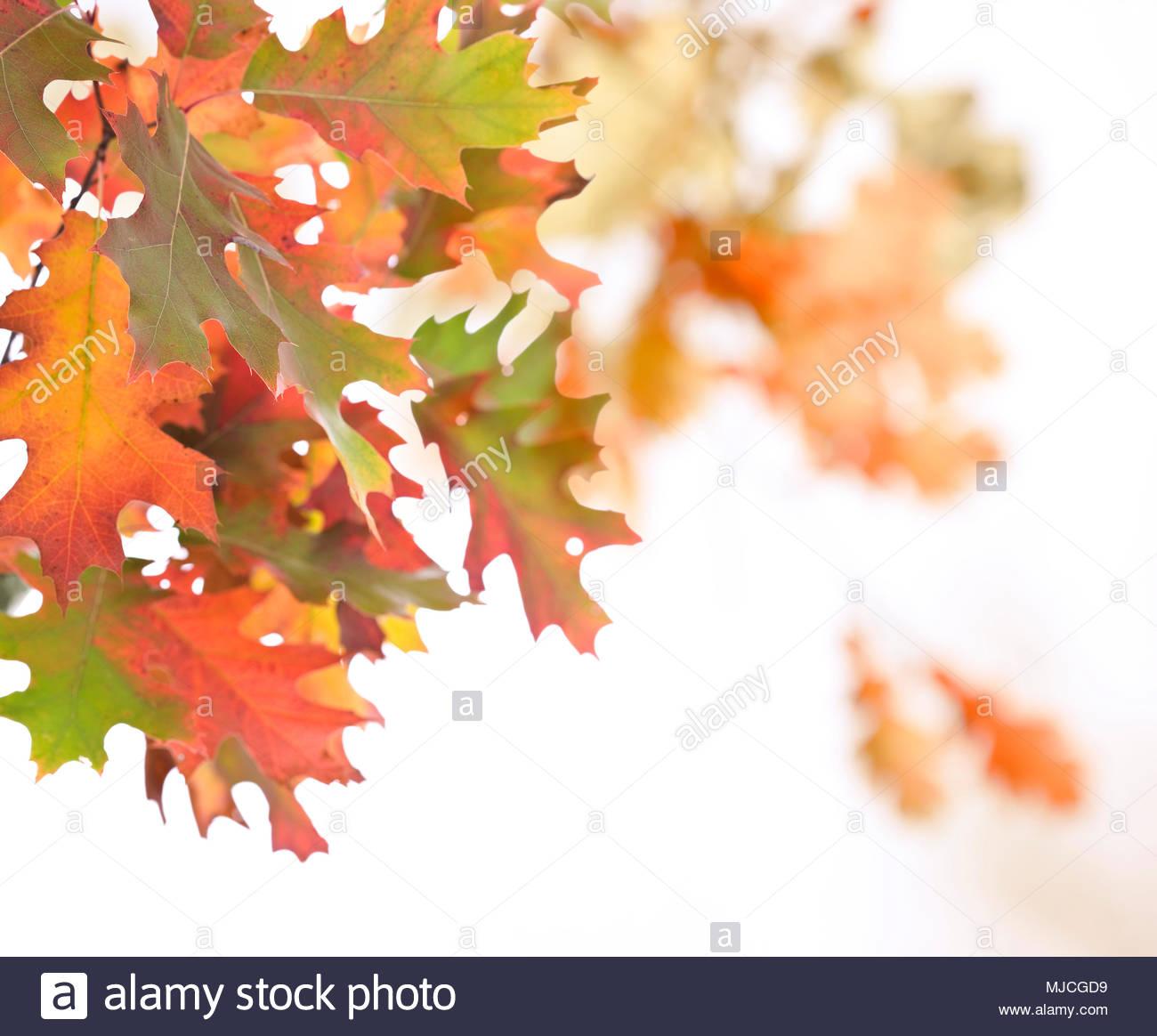 Oak Frame Stockfotos & Oak Frame Bilder - Seite 2 - Alamy
