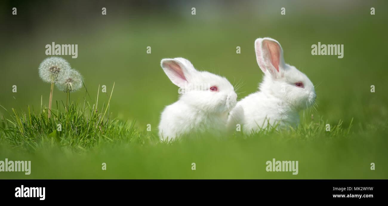 Kleine weiße Kaninchen auf grünem Gras im Sommer Tag Stockbild