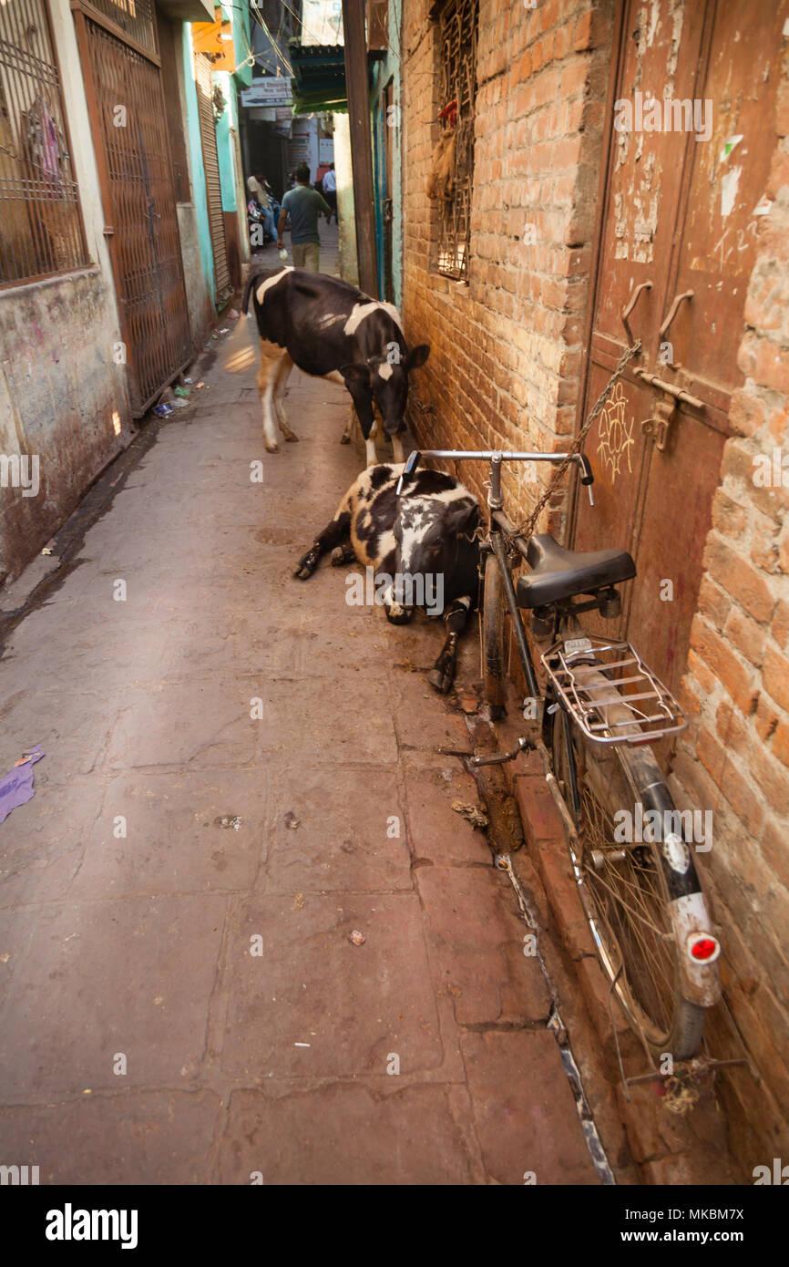 Ein Spaziergang durch die engen Gassen von Varanasi sie nicht die Bikes und Kühe zu bemerken, wie sie an jeder Ecke zu sein scheinen. Stockbild