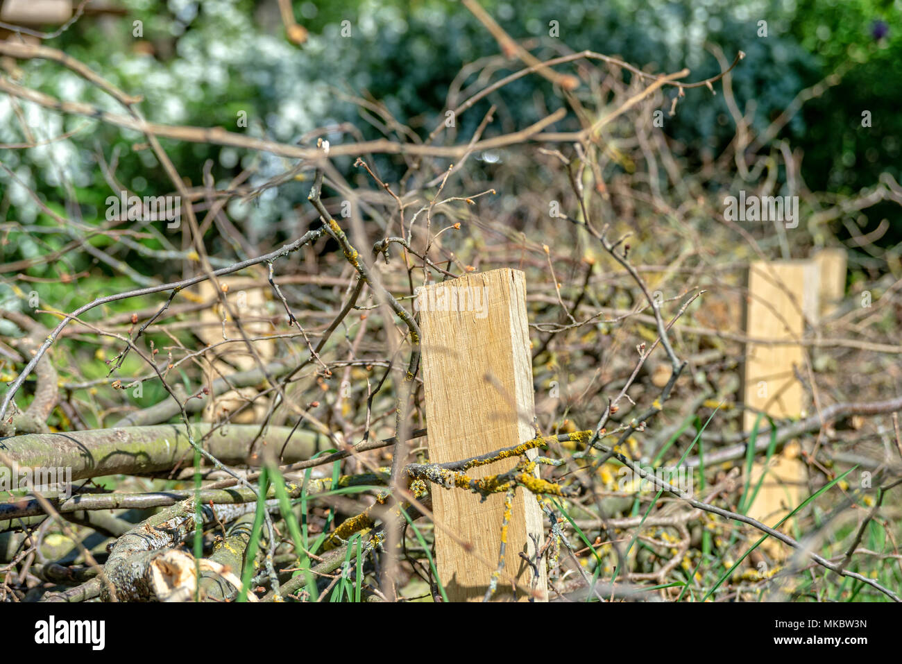 Ein Zaun Aus Holz Niederlassungen Stockfoto Bild 184043321 Alamy