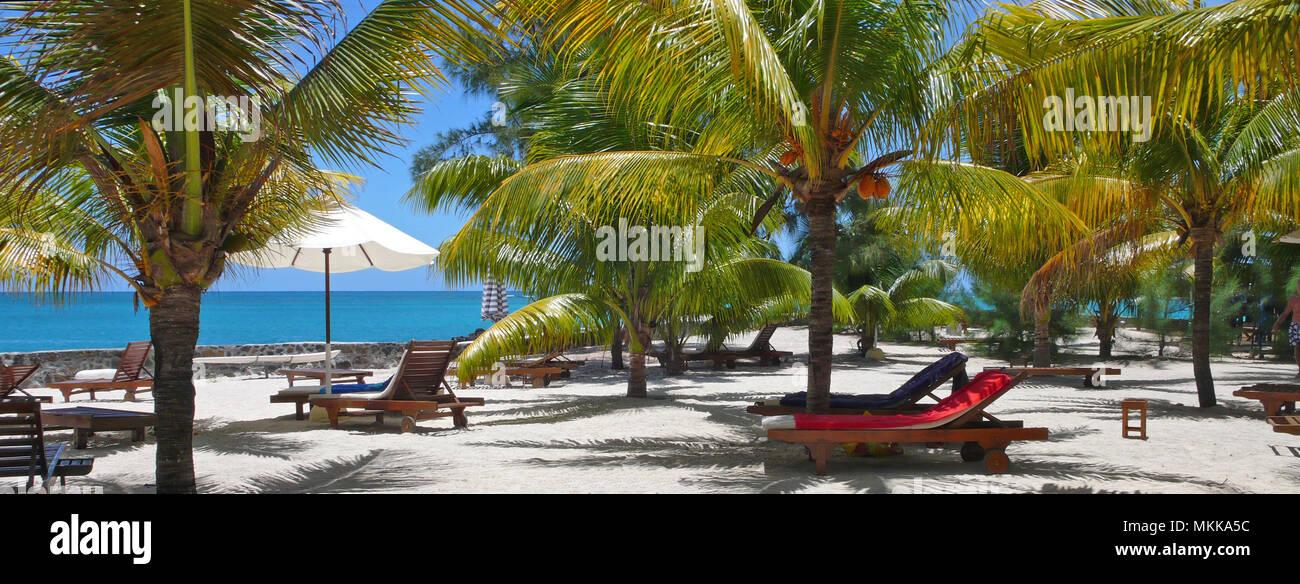 Meer, Reise; Ferien; Urlaub; Strand, Palmen, Meer, Palmenstrand, Geographie; Geografie; Stockbild
