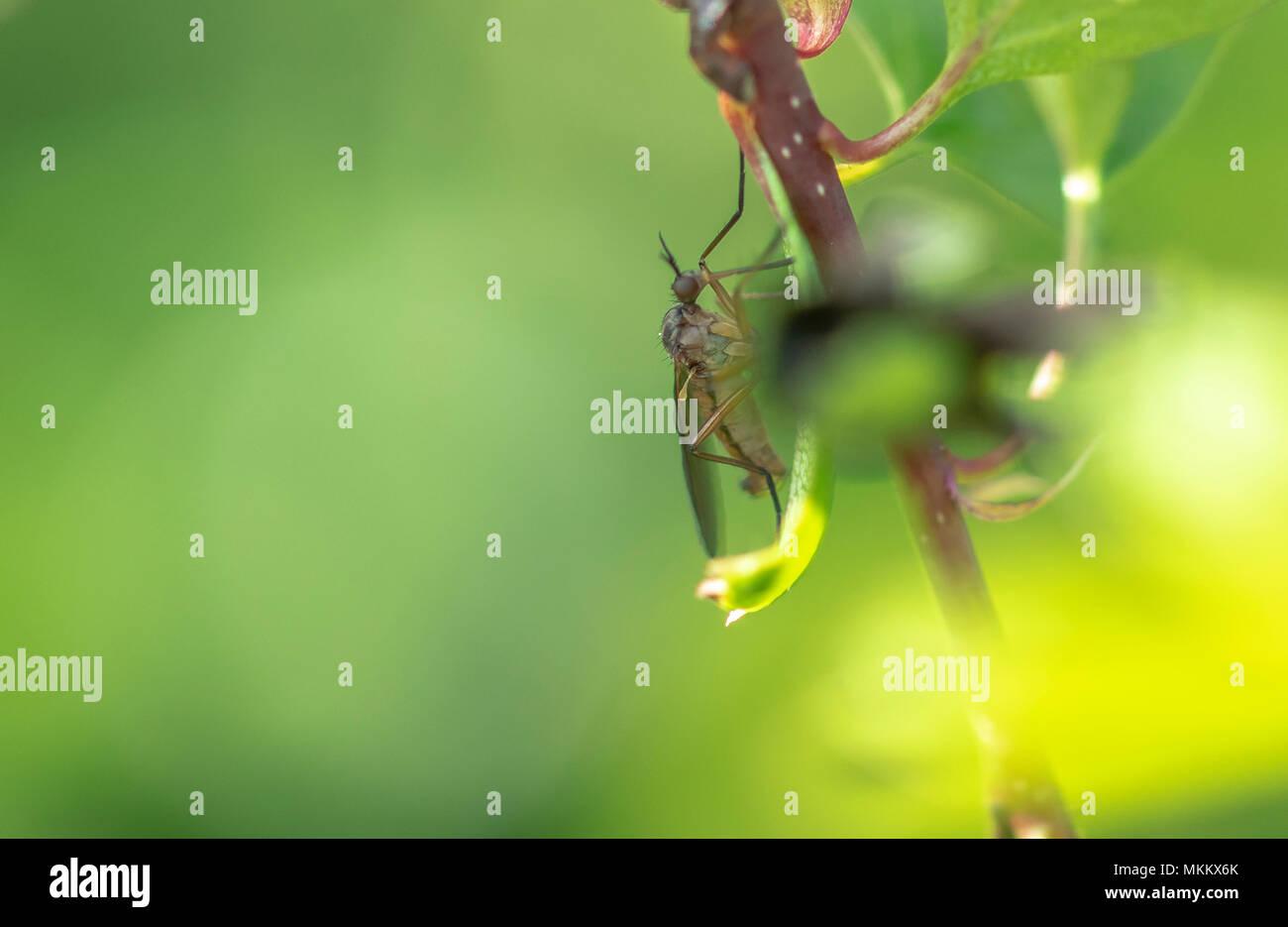 Auf bush Makrofotografie Fliegen Stockbild