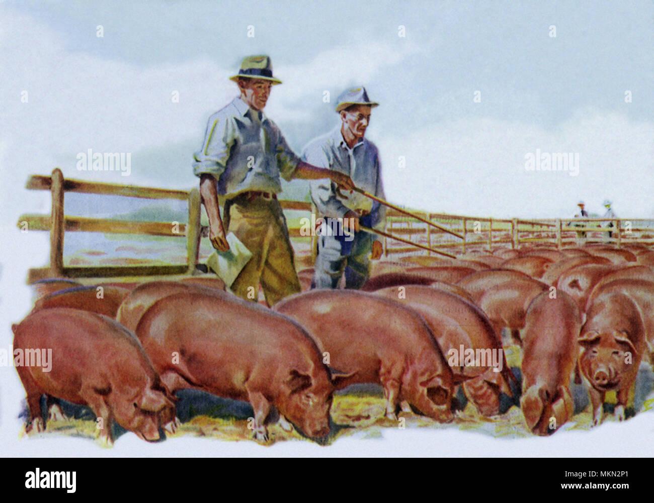 Bauern und Cowboys datieren