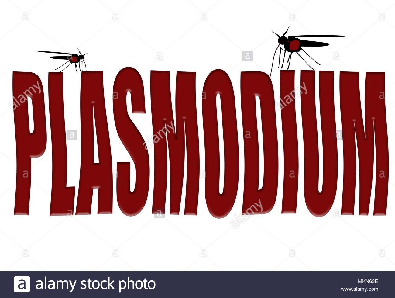 """Digital composite Moskitos saugen Blut aus dem Wort """"Plasmodium"""". Plasmodium ist eine Gattung der einzelligen Eukaryoten, sind obligate Parasiten von Stockbild"""