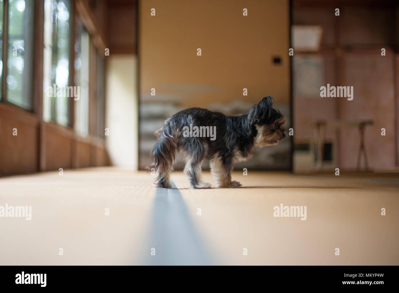 Hund Ist Auf Der Suche Nach Etwas Im Japanischen Raum Um Tokio