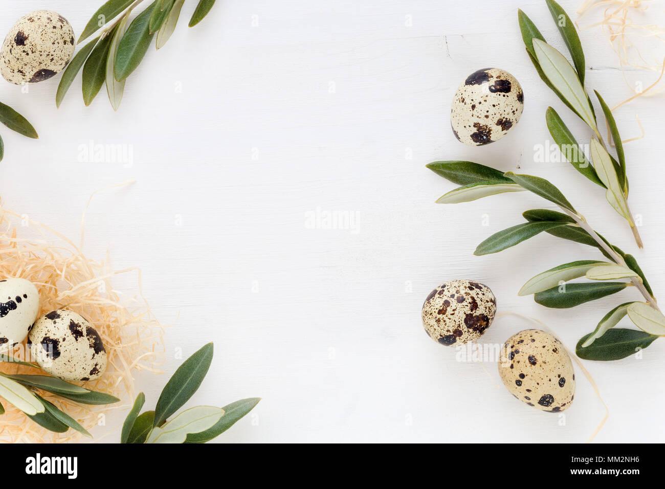 Ostern Konzept. Ostern Rahmen für Ihre Banner mit Olivenbaum Zweige und Wachteleier auf weißem Holz- Hintergrund Stockfoto
