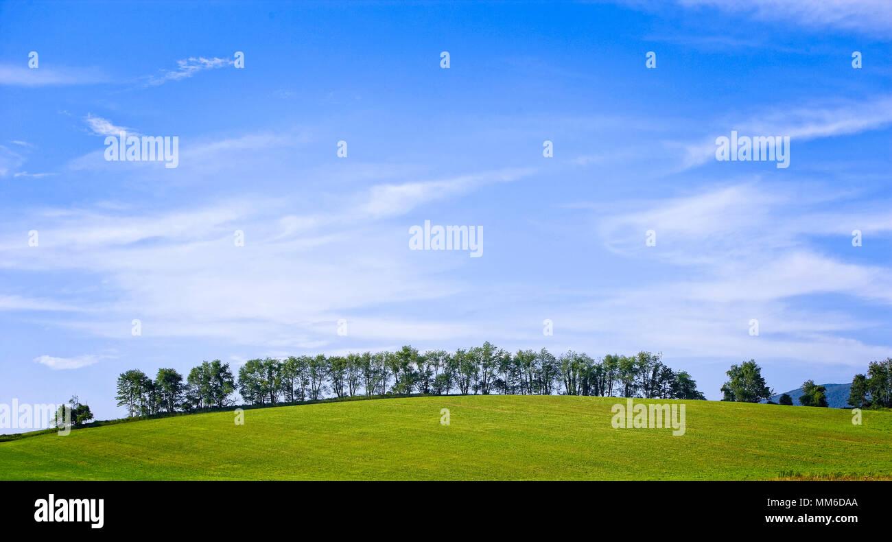 Ein Sommer Hügel mit Bäumen gegen ein weiches blauer Himmel gefüttert Stockbild