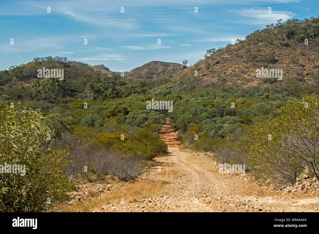 Landschaft mit Wäldern von Eukalyptusbäumen durch schmale, unbefestigte Straße in Minerva Hills National Park, in der Nähe von Springsure, Queensland, Australien Stockbild