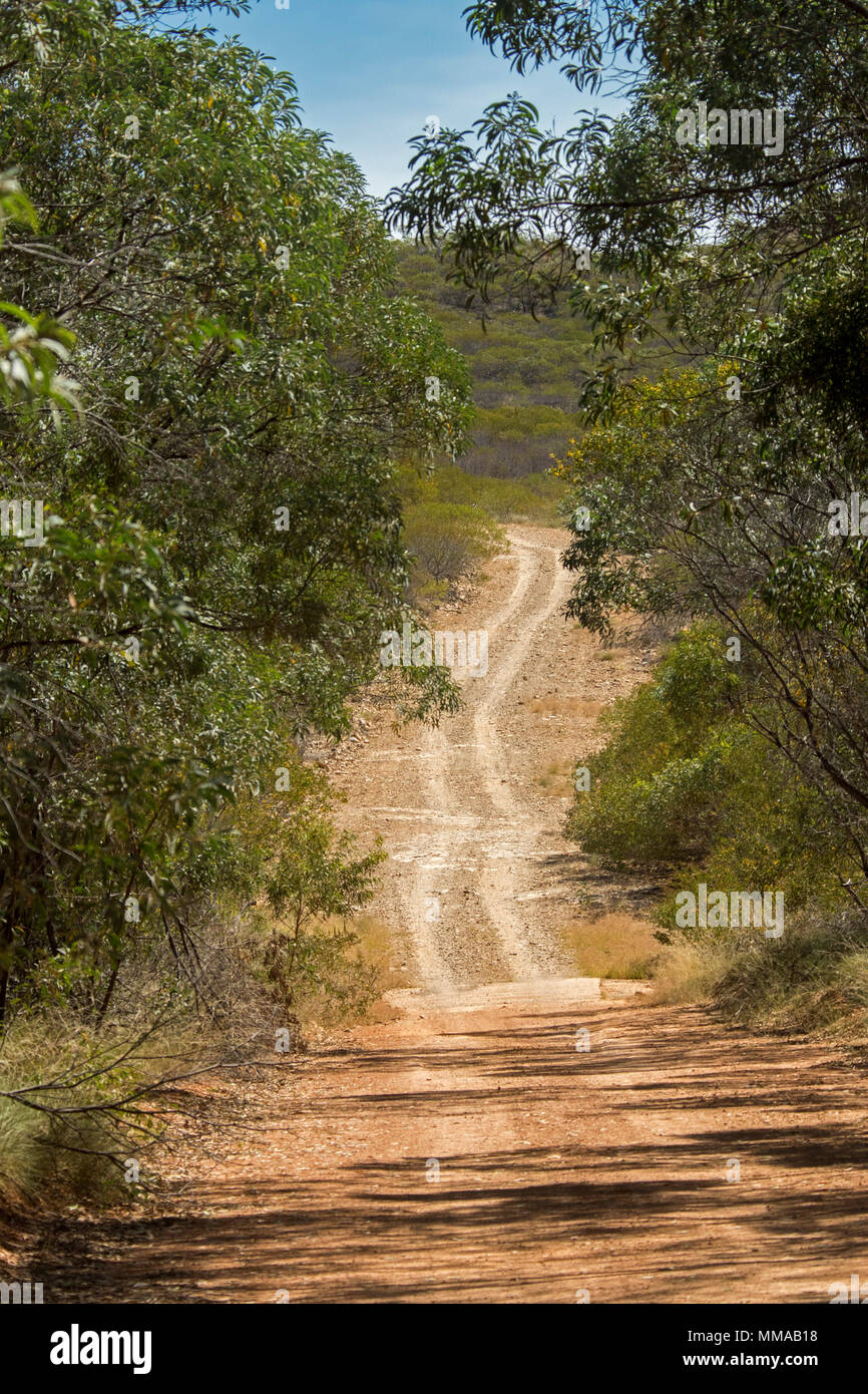 Landschaft mit Wäldern von Eukalyptusbäumen durch schmale, unbefestigte Straße in Minerva Hills National Park, in der Nähe von Springsure, Queensland, Australien Stockbild