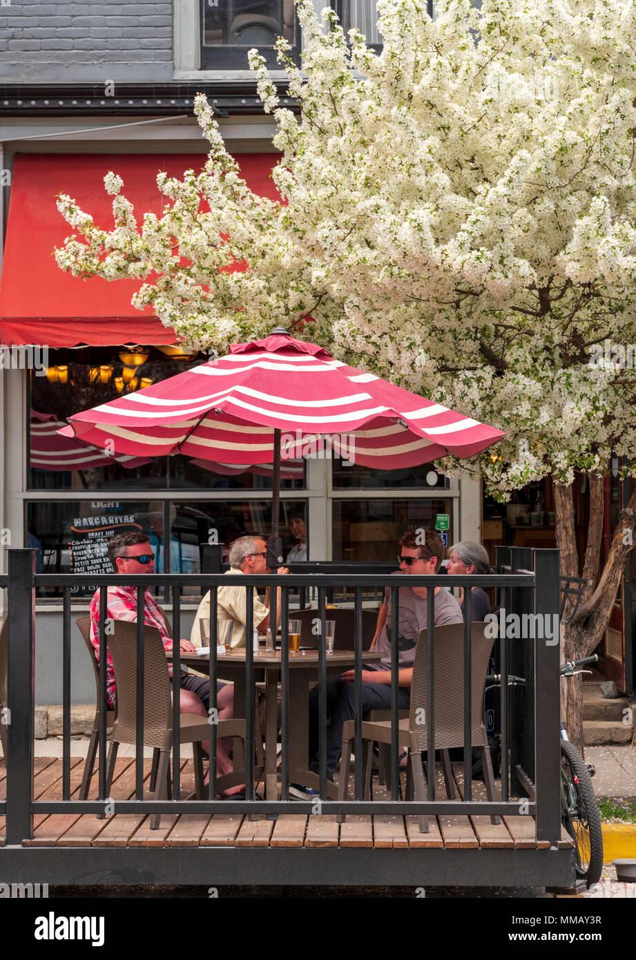 Flowering Cherry Blossom tree; Prunus; Ströme Restaurant & Cafe, Salida, Colorado, USA Stockbild