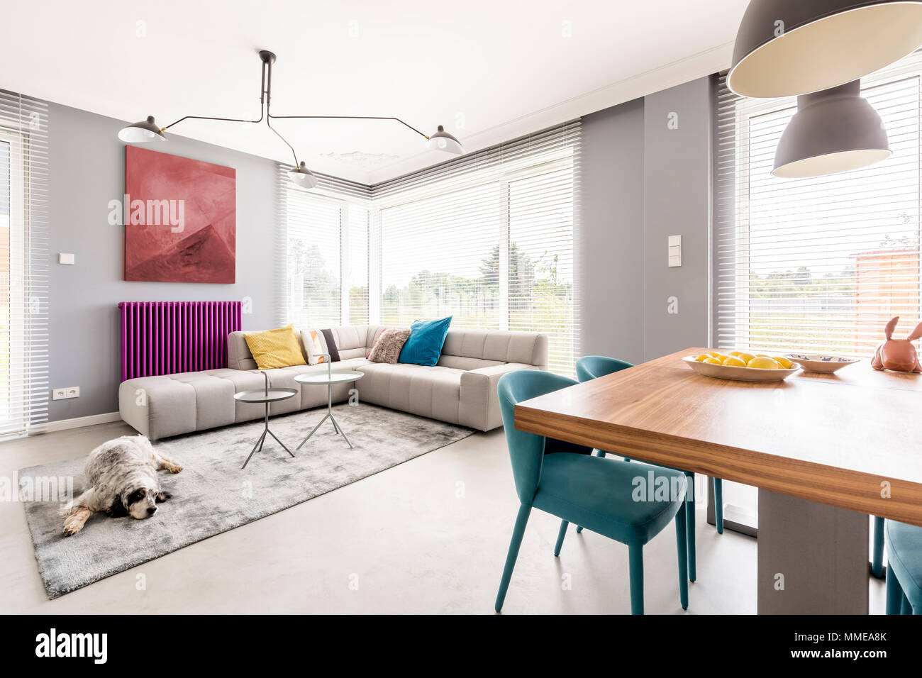 Moderne Wohnzimmer Für Familie Mit Graue Wände, Beigefarbene Ecksofa, Große  Fenster, Malerei, Lila Kühler Und Blaue Stühle Im Speisesaal