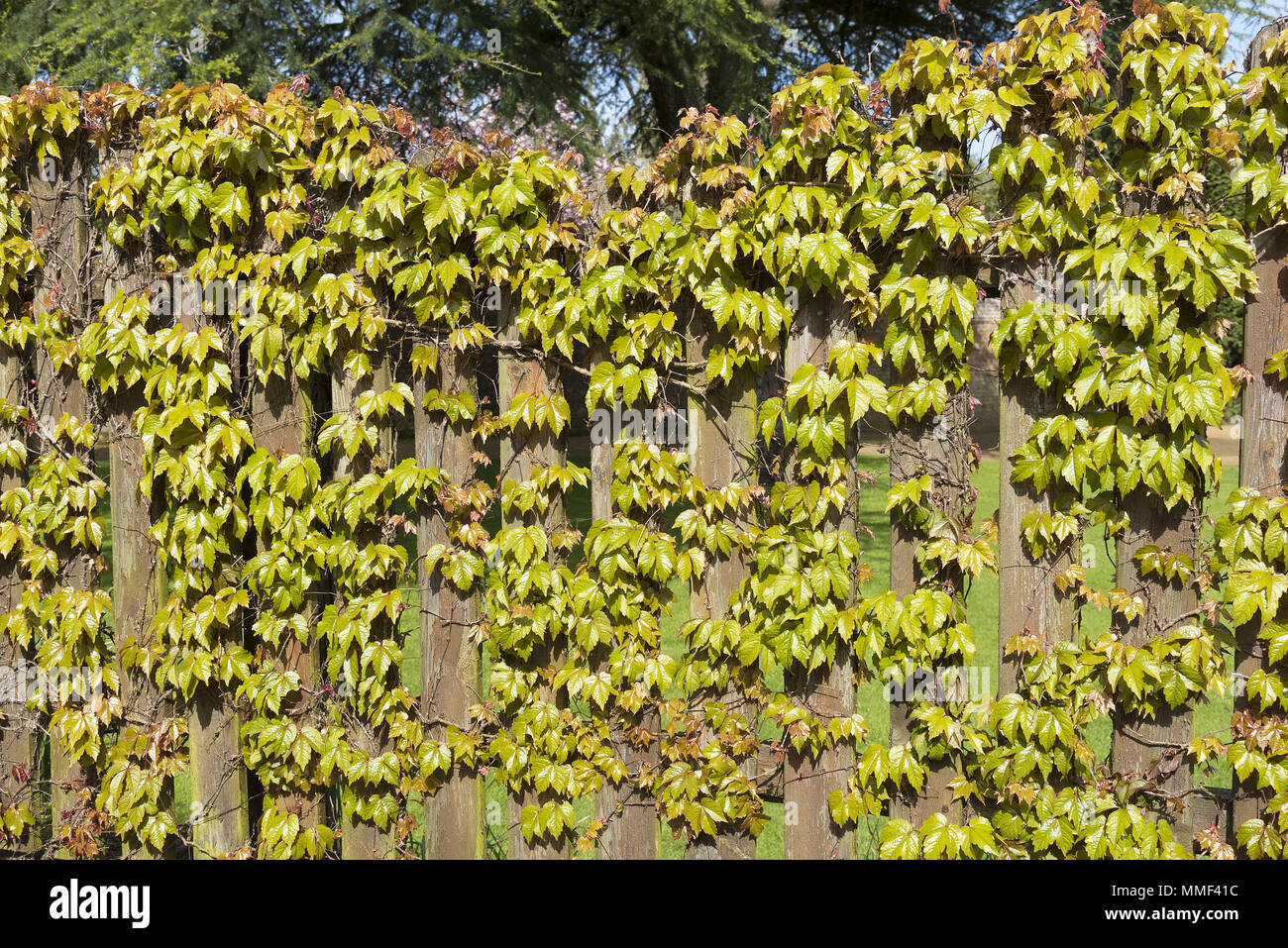 Creeper Fence Stockfotos & Creeper Fence Bilder - Seite 2 - Alamy