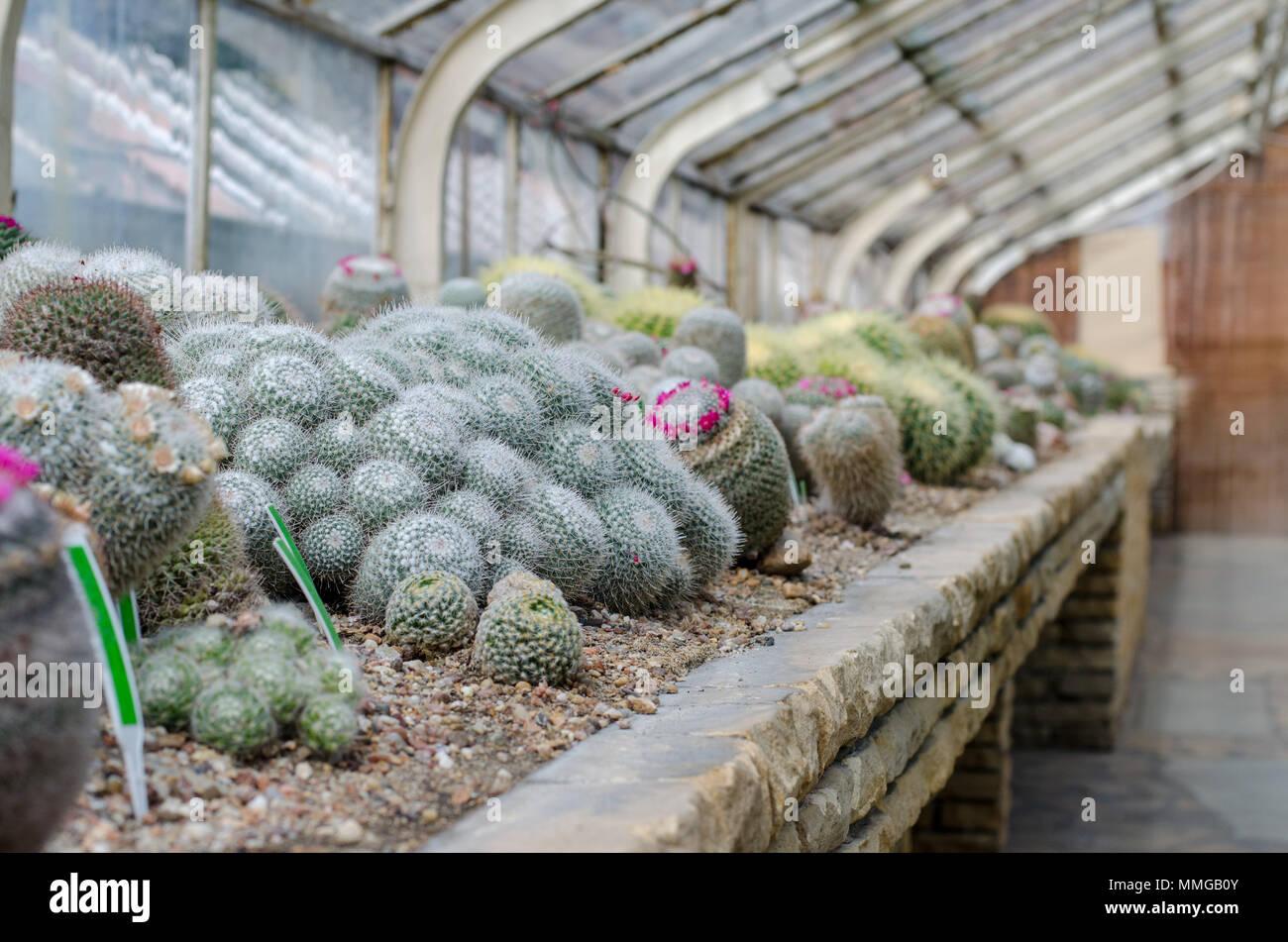 Kaktus Im Gewachshaus Stockfotos Kaktus Im Gewachshaus Bilder Alamy