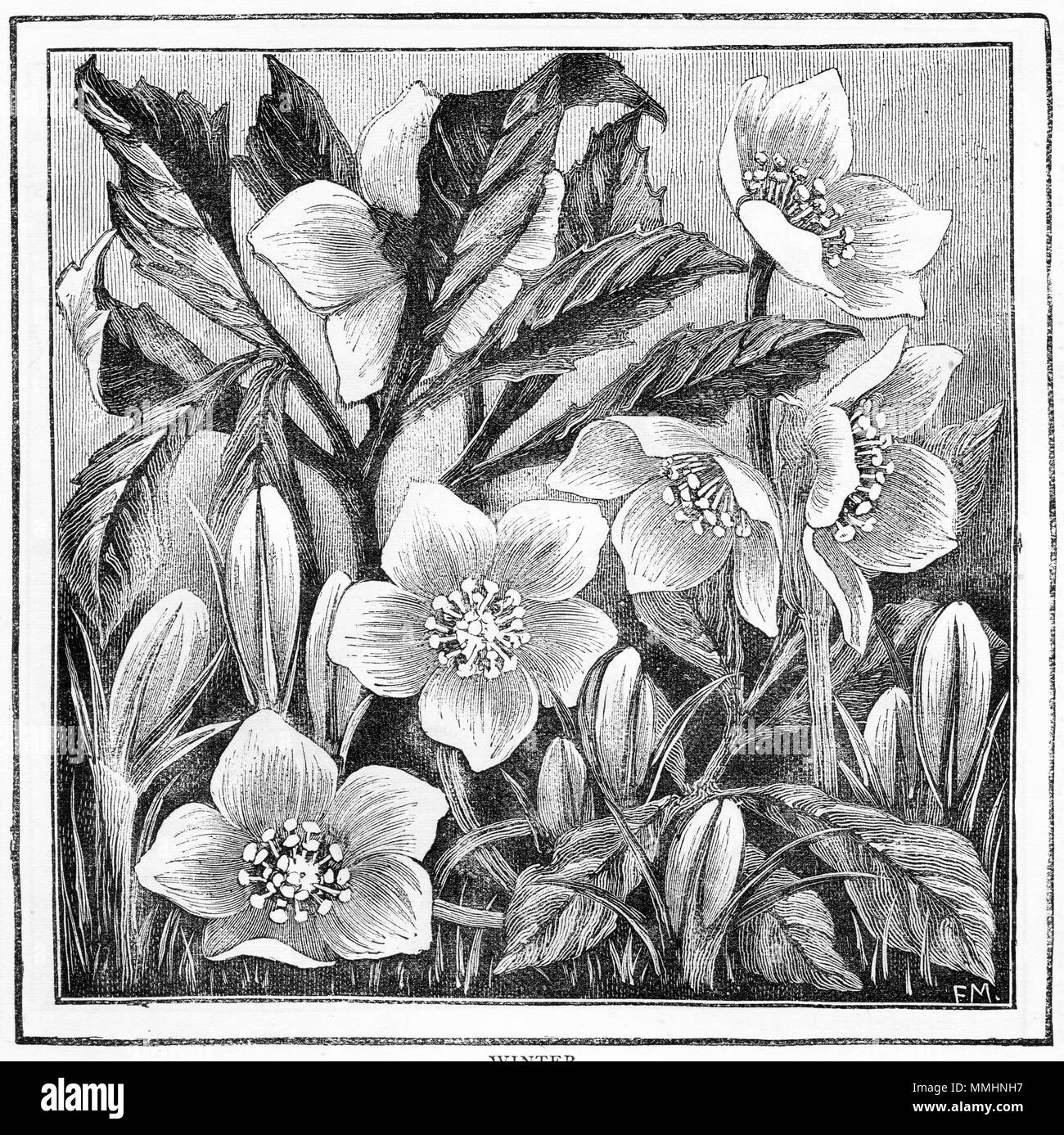 Gravur von Blumen in einem Rahmen. Von einem ursprünglichen Gravur ...
