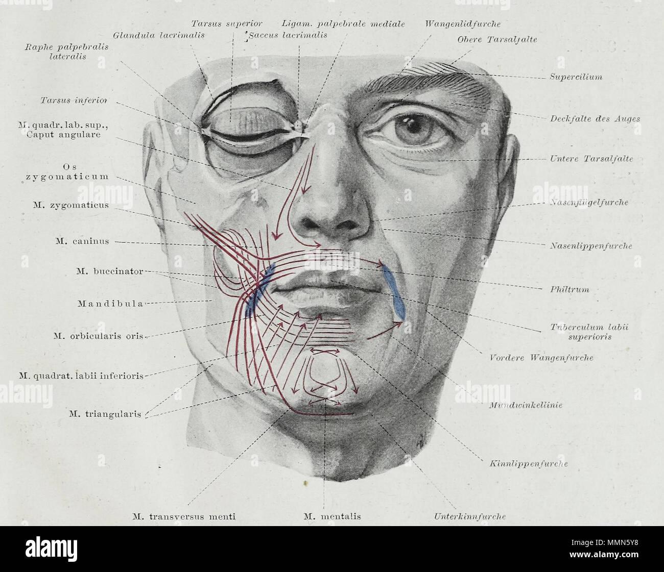 Erfreut Wie Für Anatomie Studieren Bilder - Physiologie Von ...