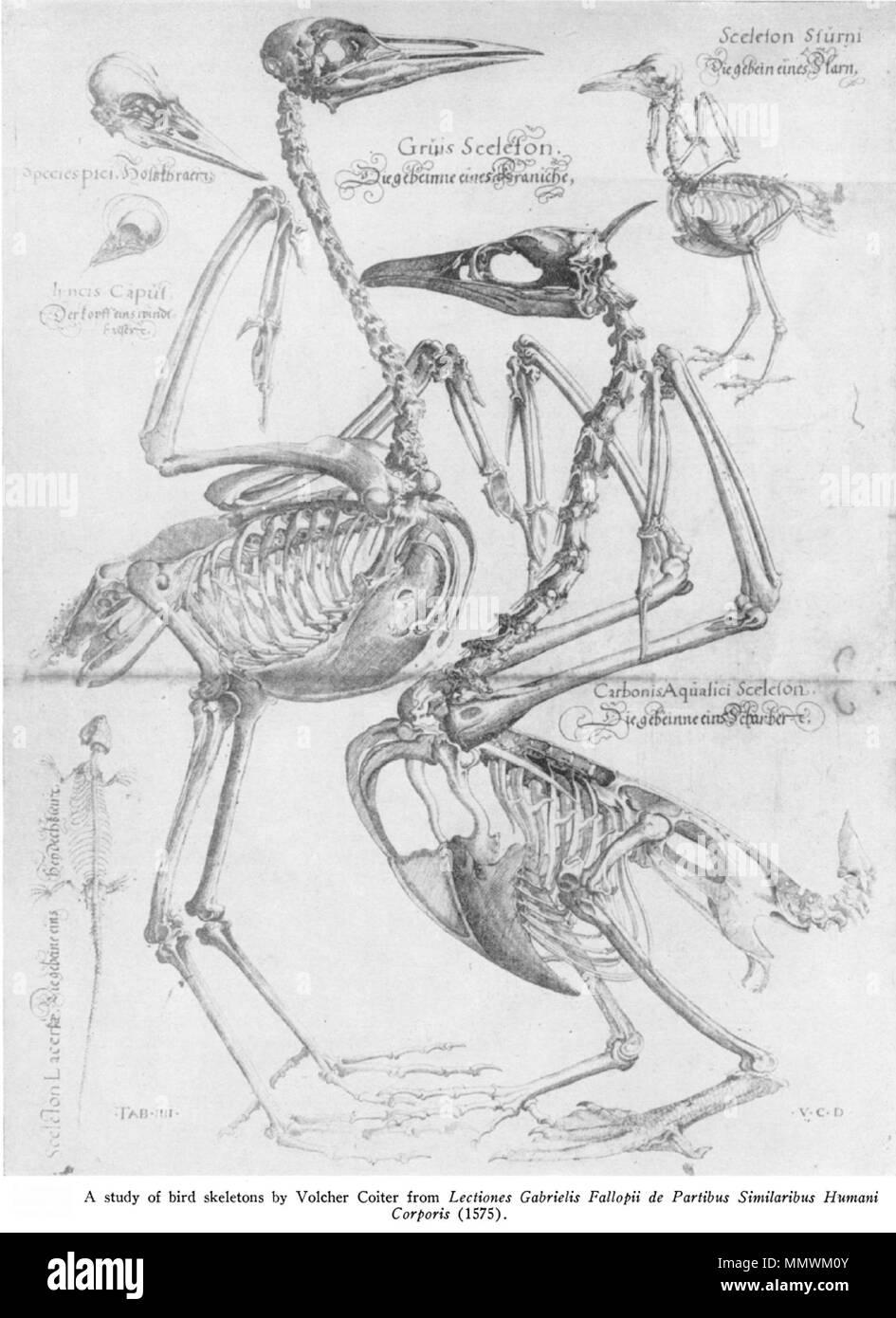 Fein Huhn Muskelanatomie Galerie - Anatomie Ideen - finotti.info