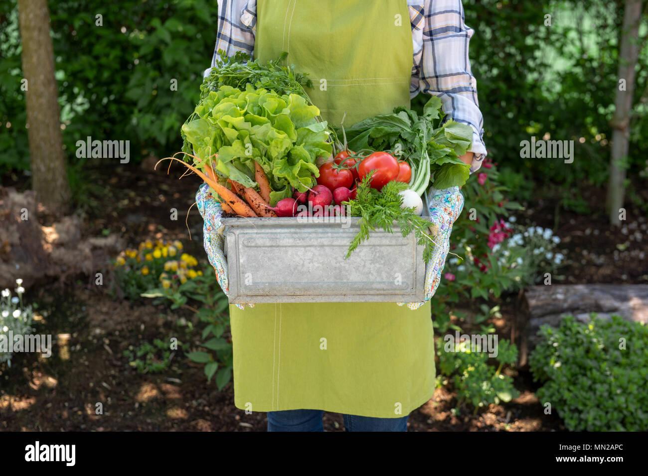 Nicht erkennbare Frau Bauer Holding Kiste voller frisch geerntete Gemüse in Ihrem Garten. Homegrown bio produzieren Konzept. Stockbild