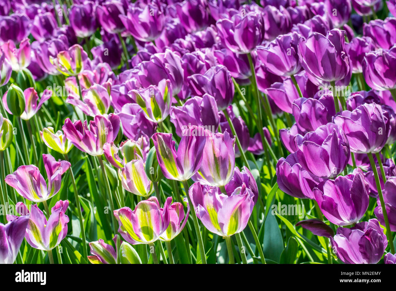Germany City Flower Stockfotos & Germany City Flower