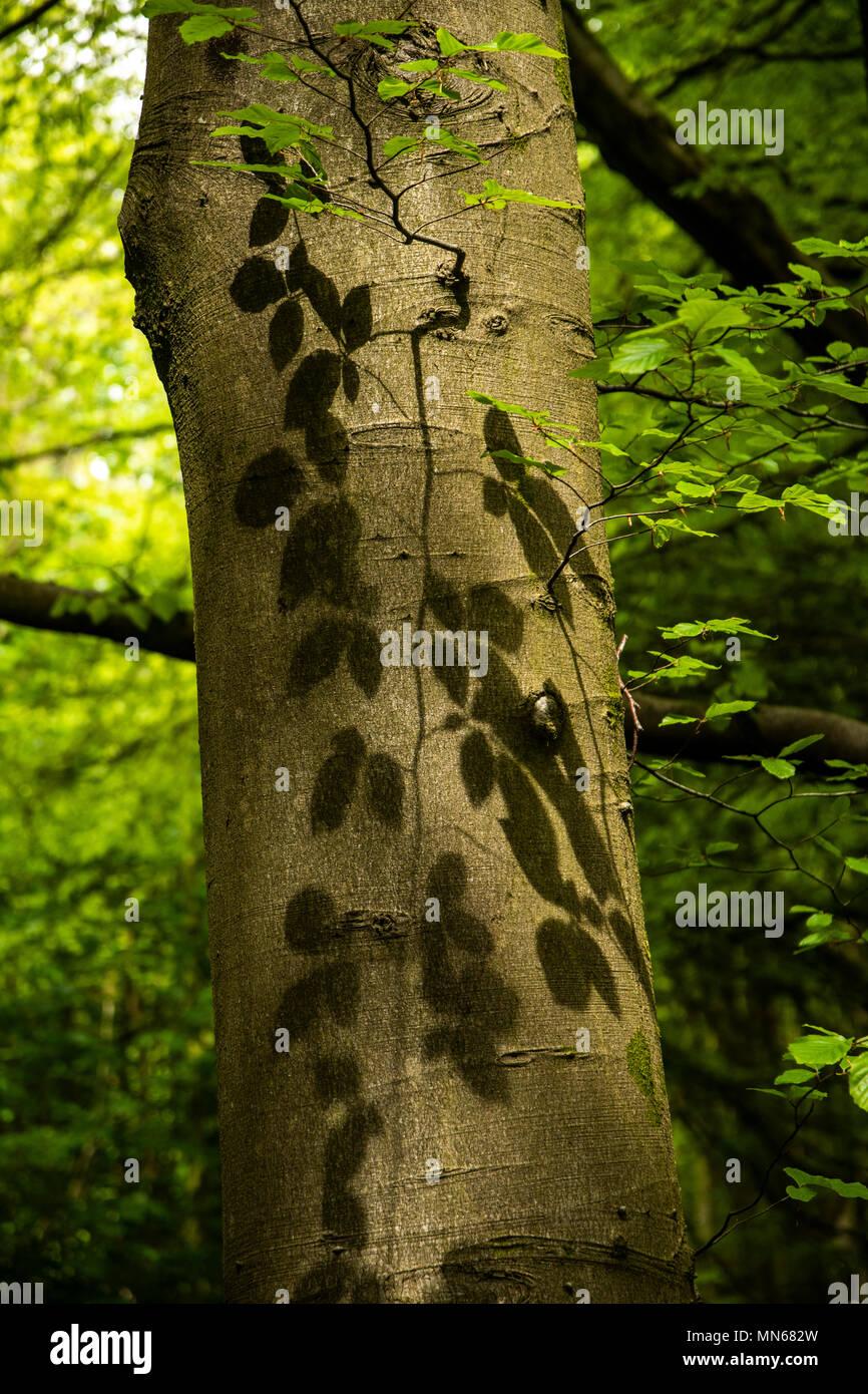 Blätter und shaow Muster gegenüber der Baum Stockbild