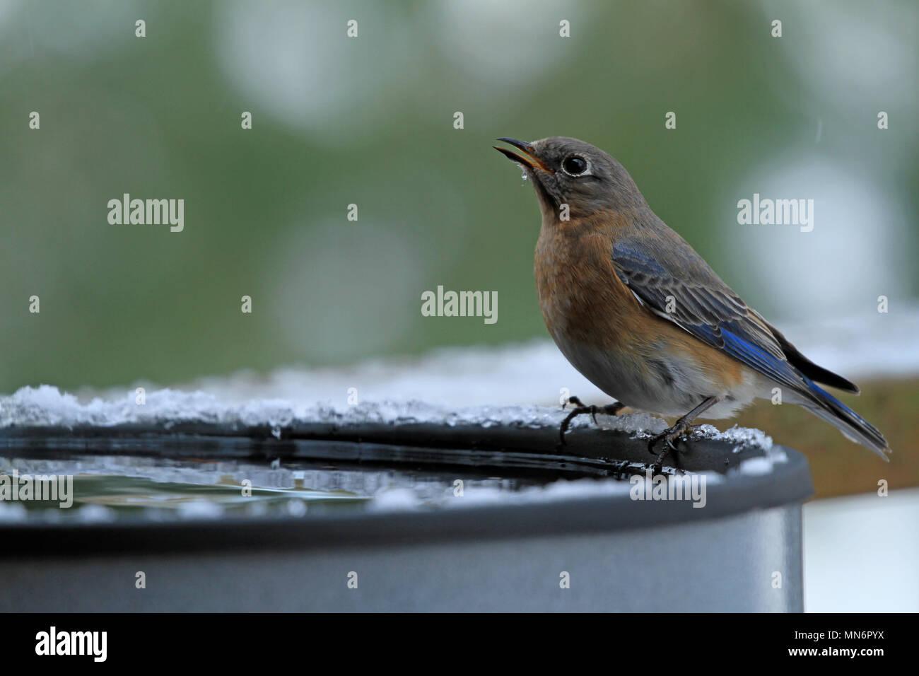 Eis Im Vogelbad Stockfotos Eis Im Vogelbad Bilder Alamy