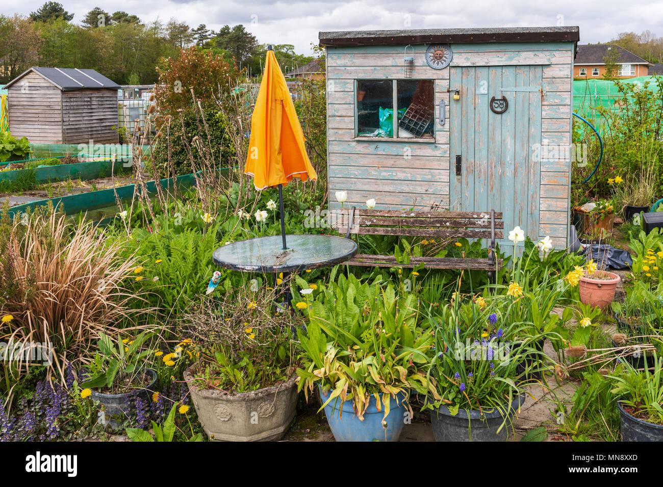 Kleinen Verwilderten Garten Grundstuck In Einem Gemeinschaftsgarten Kilwinning Ayrshire Schottland Stockfotografie Alamy