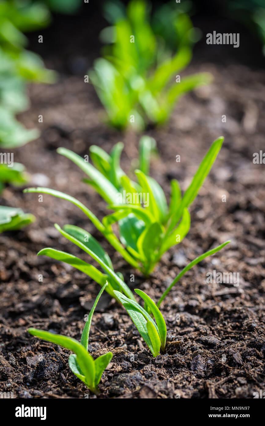 Vertikale Foto Mit Mehrere Frische Pflanzen Wachsen Aus Dem Boden